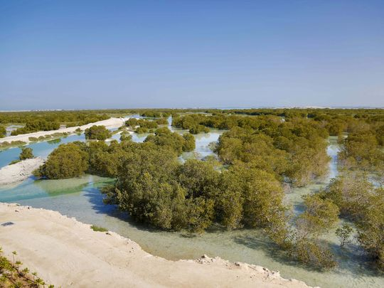 National Day event to showcase UAE's mangroves, depicting country's 49-year journey