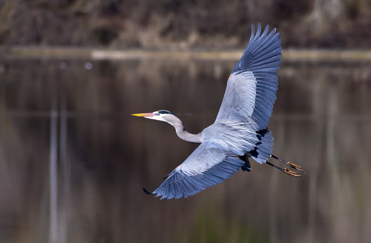 Photographer captures heron being attacked by eel in flight | The State