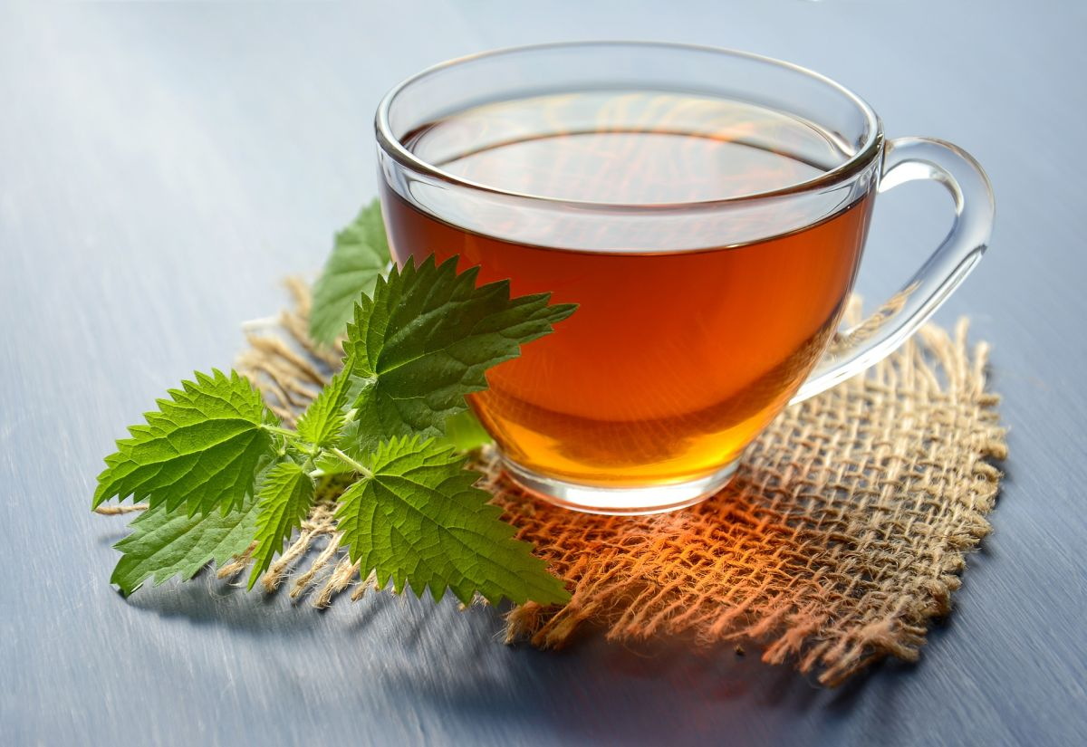 Scientific study supports the benefits of nettle to block fat and lose weight | The State