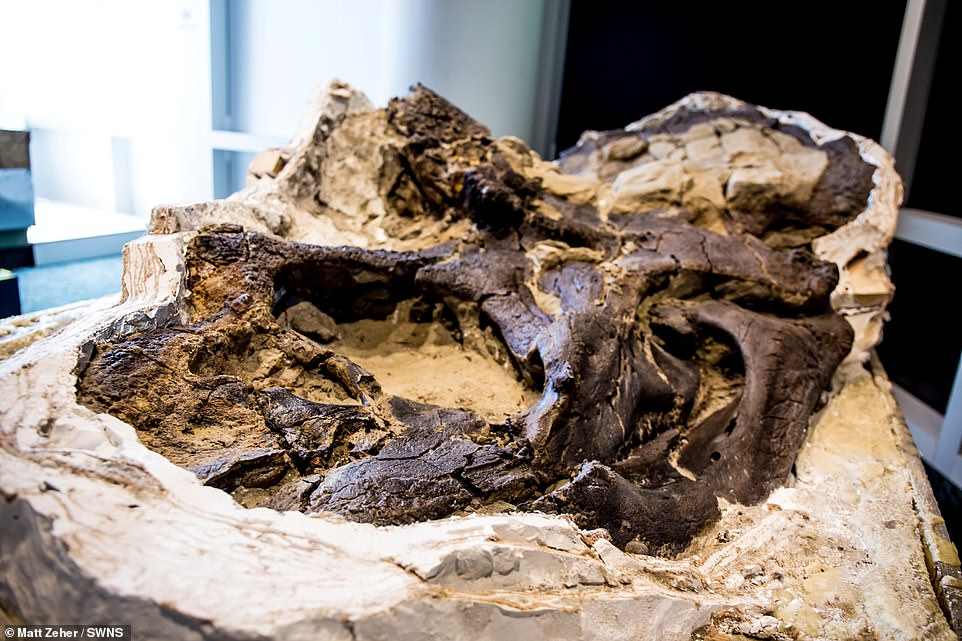 Scientists reveal the world's first ever complete T-rex skeleton