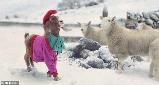 TK Maxx kicks off the festive season with a holiday advert starring a GOAT in designer gear