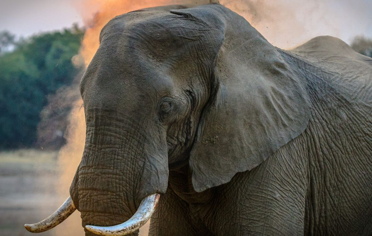 """They ask judges to declare elephant a """"person"""" to be released from a zoo in New York   The State"""