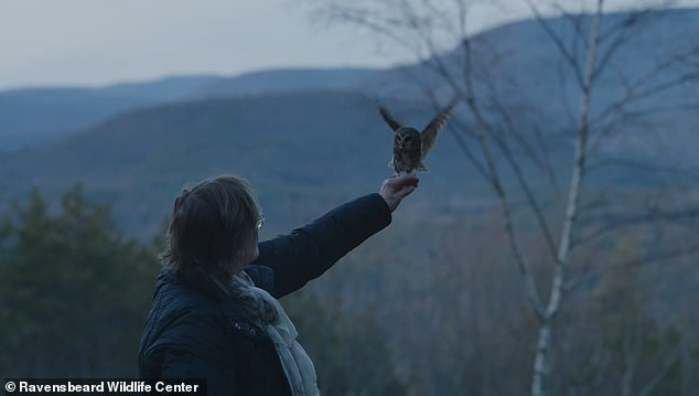 Tiny owl found hiding inside Rockefeller Christmas tree in New York City released back into the wild