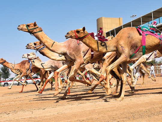 'Aflaj' and camel racing in UAE now included as a Unesco cultural heritage