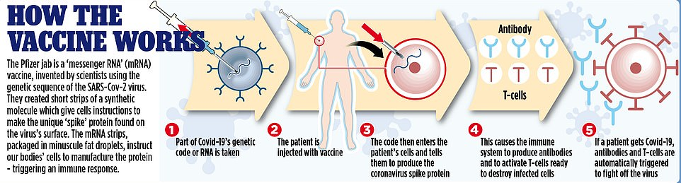 A graphic shows how the Pfizer jab will work, by entering the patient's cells, causing the immune system to produce antibodies and activate T-cells ready to destroy those infected with coronavirus
