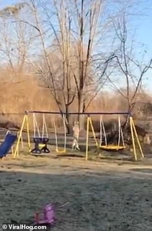 The dog misjudged his leap over the swing before flipping over three times and landing on his belly