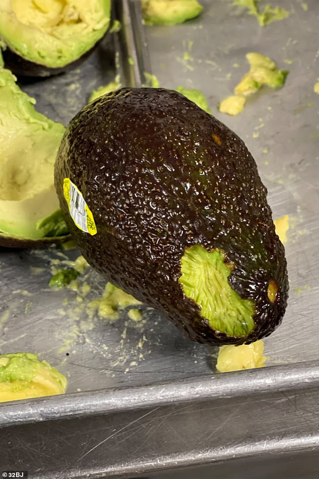 The hungry rats have chomped through avocados stored in the restaurant's backrooms