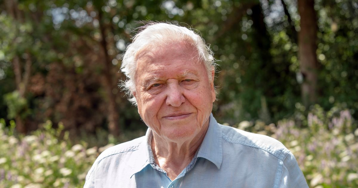 Sir David Attenborough admits he may never film abroad again