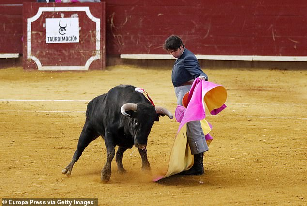In the ring: Cayetano at a bullfight in Valladolid, Spain, in February this year