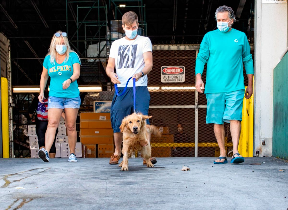 20 Golden Retriever dogs arrive in Florida to be euthanized in China   The State