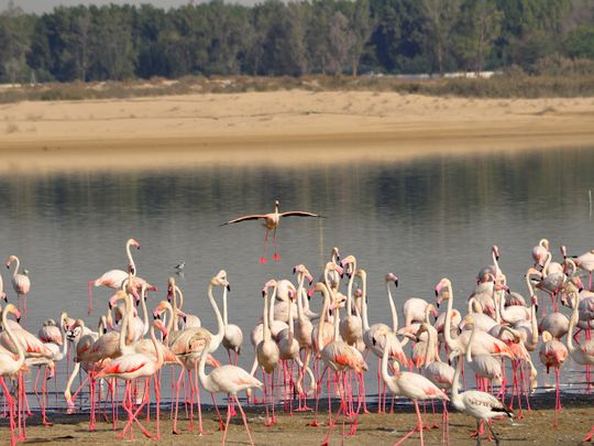 Al Wathba Wetland Reserve to reopen to visitors on January 1, 2021
