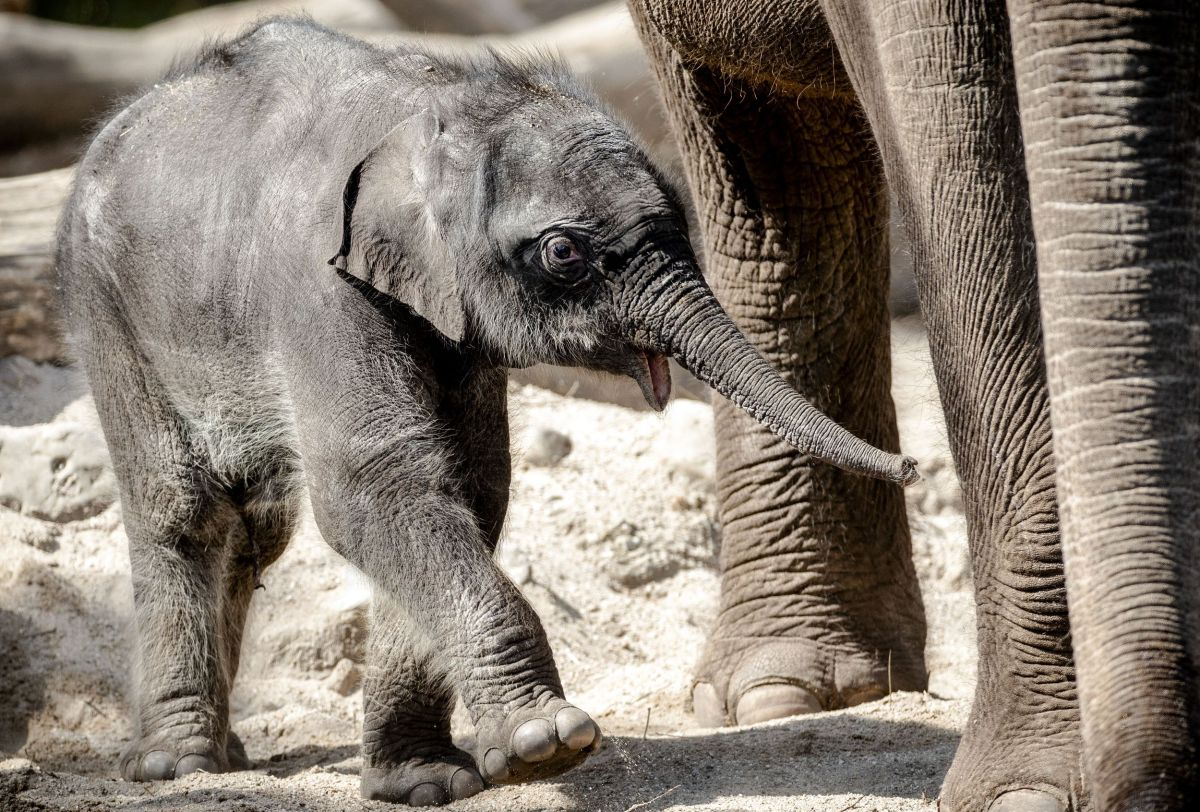 Alarm for dead baby elephants at New York Zoo | The State