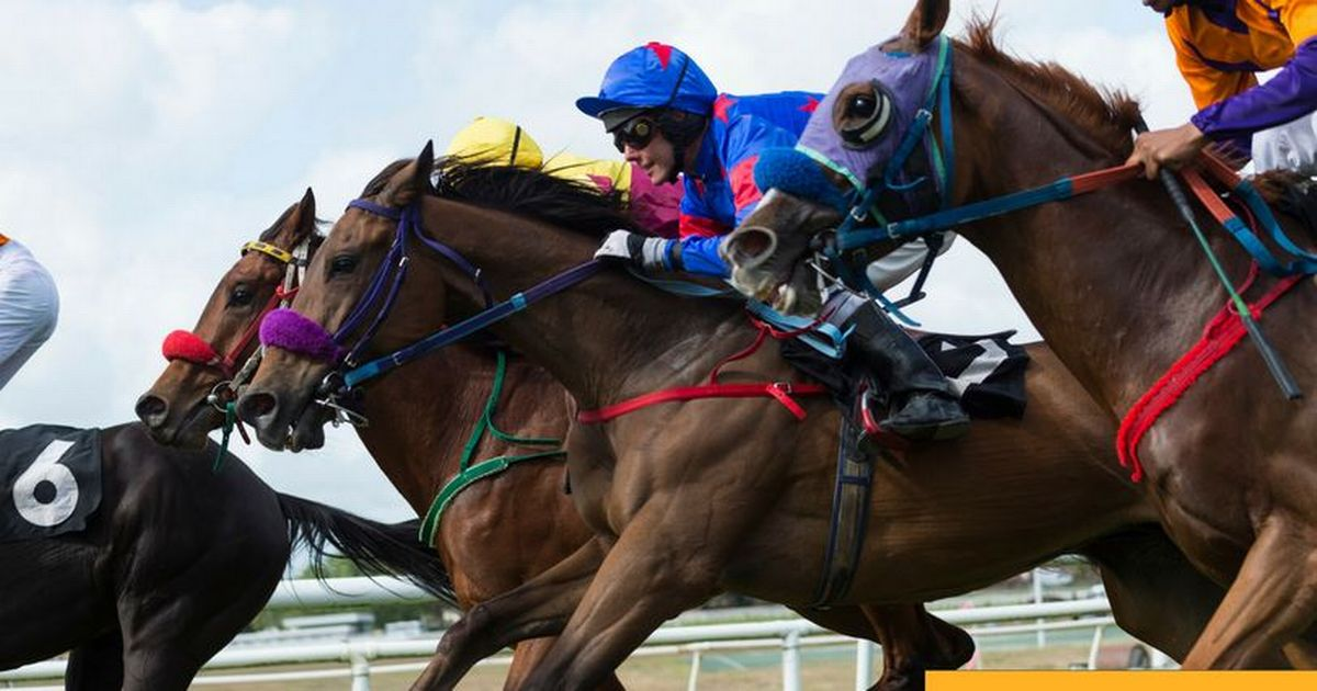 Ascot racing: Claim your free £5 Betfair bet for Saturday's biggest races