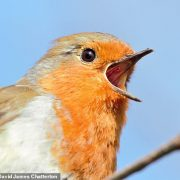 Bird species can increase life satisfaction as much as pay rise