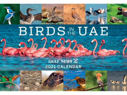 Brilliant 'Birds in the UAE' revealed in all their glory