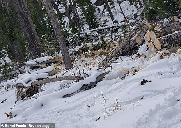 Can YOU spot the dogs that have managed to camouflaged themselves into their surroundings?