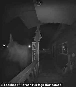 Curious moose inspects a doorbell during the dead of night before being scared off by a barking dog