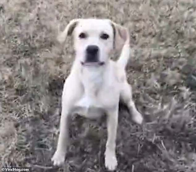 Dog somersaults through air jumping over children's swing[Video]