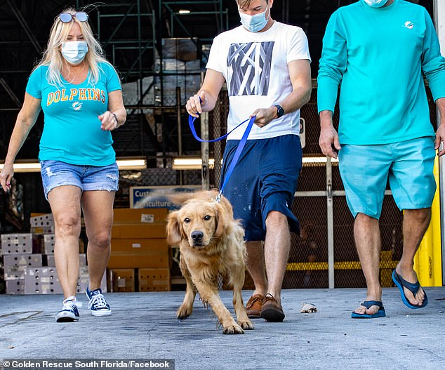 Heartwarming moment 20 golden retrievers rescued from Chinese meat trade meet new owners