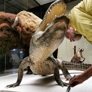 'Hitler's alligator' is preserved forever and will go on display in Russia