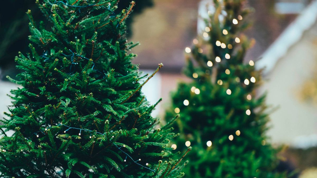 Is the best time to buy your Christmas tree | The State