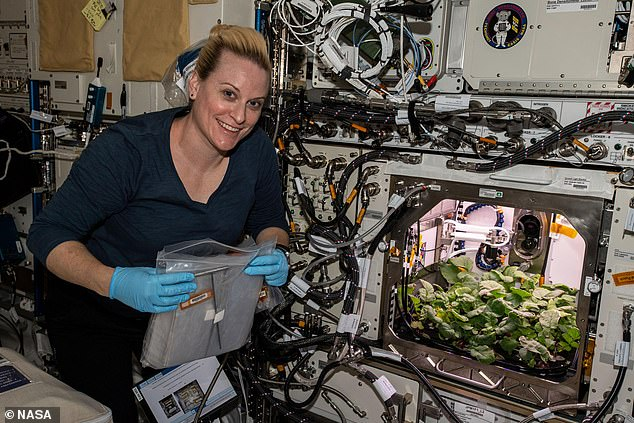 NASA astronauts grow radishes in SPACE aboard the ISS