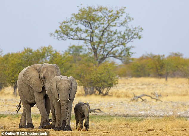 Namibia is putting 170 ELEPHANTS up for sale due to over-population