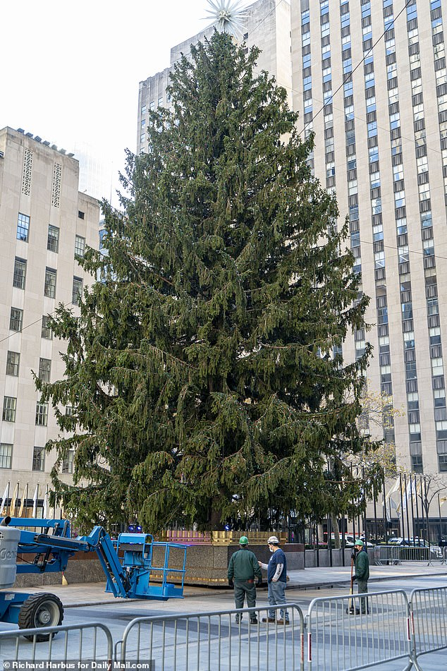 Rockefeller Christmas Tree visitors will need a TICKET and will get just five minutes to see it