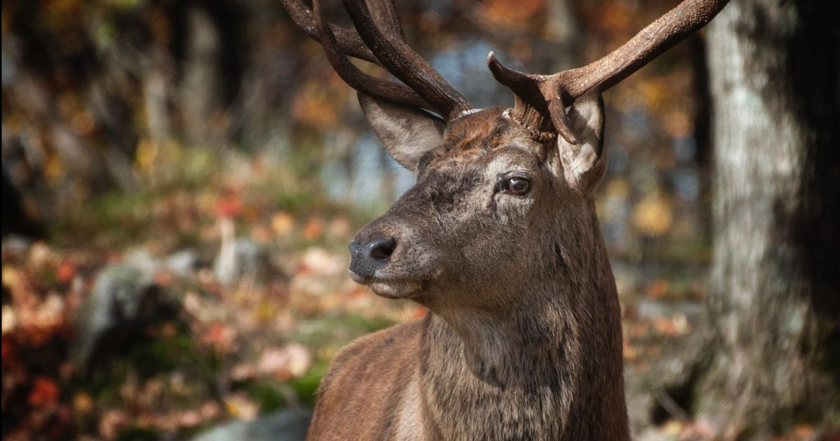 The deer that lives with an arrow through its head | The State