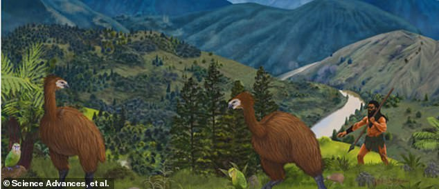 There would have been four TIMES as many flightless bird species if not for humans, study reveals