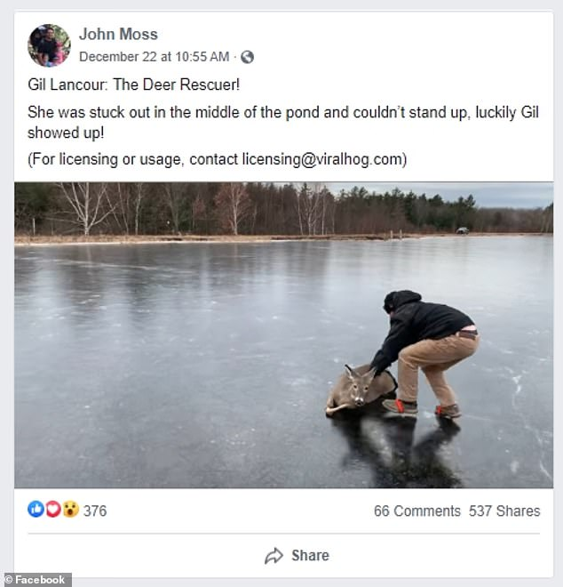 Watch the moment a Wisconsin man walks out on a frozen pond, rescues deer unable to stand