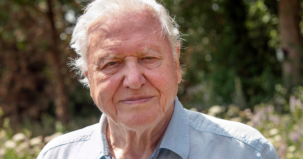David Attenborough's new year message of hope as he calls for 'positive change'