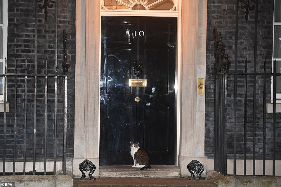 Larry the Cat sits outside the door to 10 Downing Street as the Clap for Carers campaign makes its return to the nation