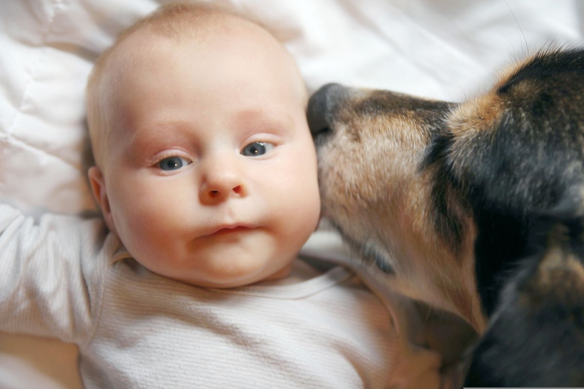 4-month-old baby was crushed by his dog | The State