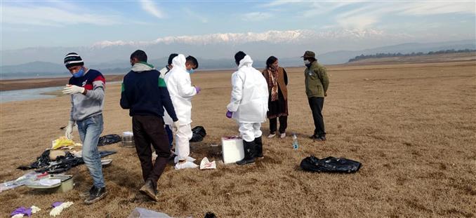 Avian flu killing migratory birds in Pong dam