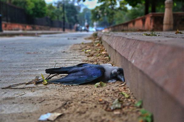 Bird flu confirmed in 7 states; samples from Delhi, Maharashtra, Chhattisgarh sent for testing