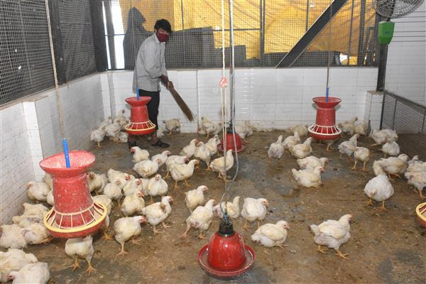 Bird flu confirmed in six states, including Haryana, Himachal; others asked to stay alert