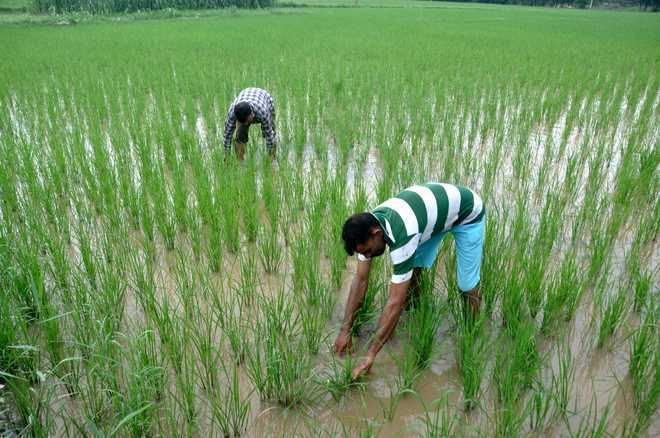 Changing climatic conditions in arid regions of Haryana lead to higher yield of kharif crops, claims study