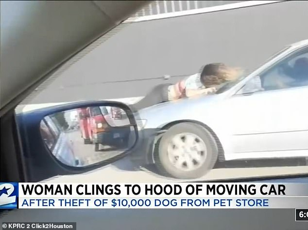 Moment pet shop worker clings to the hood of a speeding car