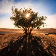 Photos: Gulf News readers share pictures of the beautiful deserts in the UAE