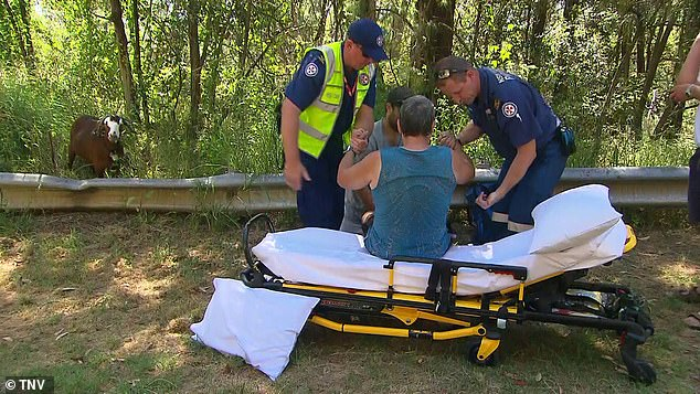 Rampaging goat ATTACKS a walker in the Blue Mountains leaving him with horrific injuries