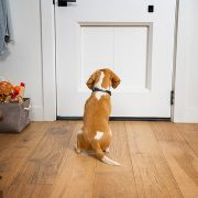 Smart doggie 'garage door' nabs 'Innovation Award' at CES for replacing the traditional flap