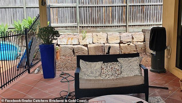 Social media struggles to find deadly Eastern brown snake hidden in a Brisbane, Australia backyard