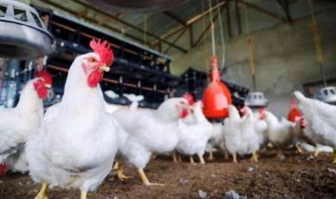 Suspected case of bird flu reported in Punjab's Dera Bassi