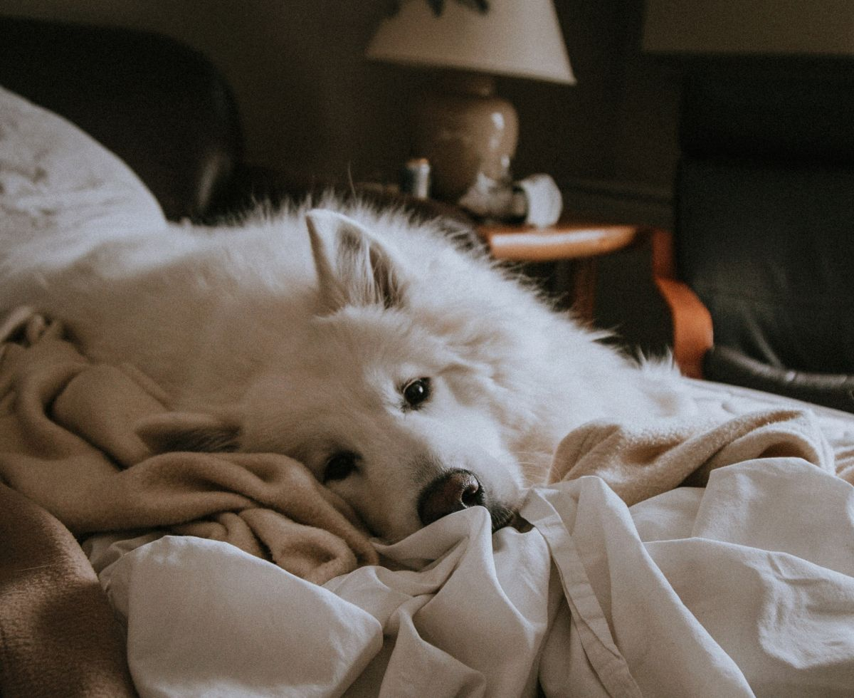 Why is it good to let your dog sleep with you, according to science | The State