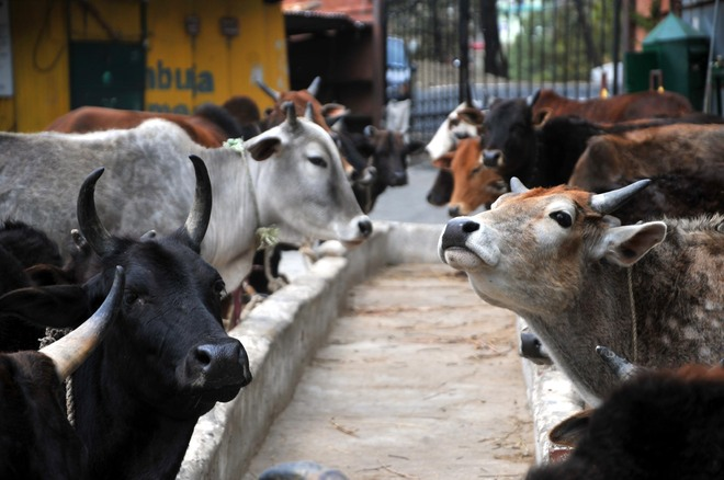 Withdraw or amend rules on confiscation of animals: SC
