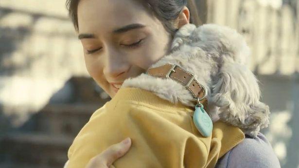 A dog wears a Samsung SmartTag