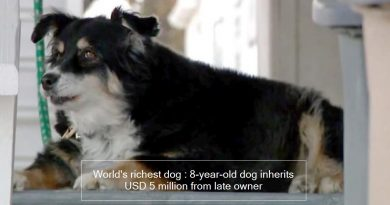 World's richest dog : 8-year-old dog inherits USD 5 million from late owner