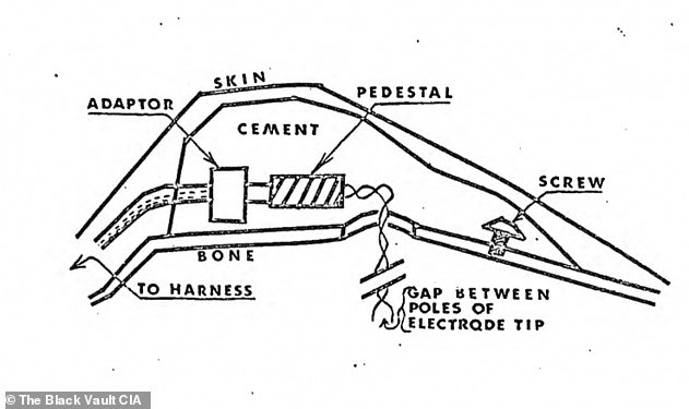 Scientists at first used a plastic helmet(schematic pictured) that delivered the stimulation to the dog's brain but then moved on to embedding the electrode within a mound of dental cement into the skull