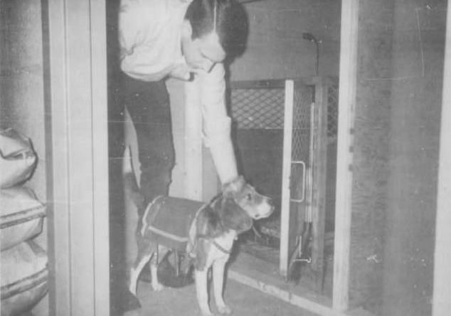 CIA's 1960s experiments to create 'remote control' dogs by implanting electrodes into their brains